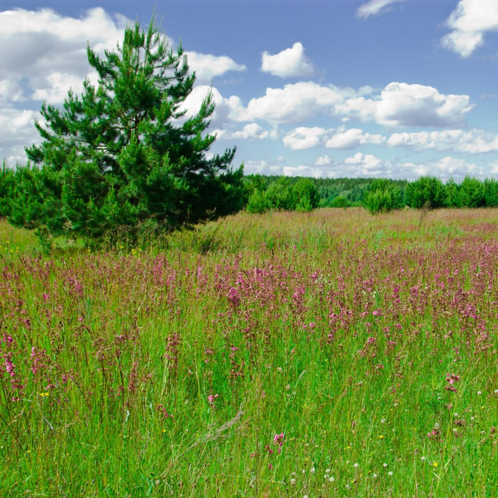 Scenic meadow on a sunny day. Tourist base in the forest.