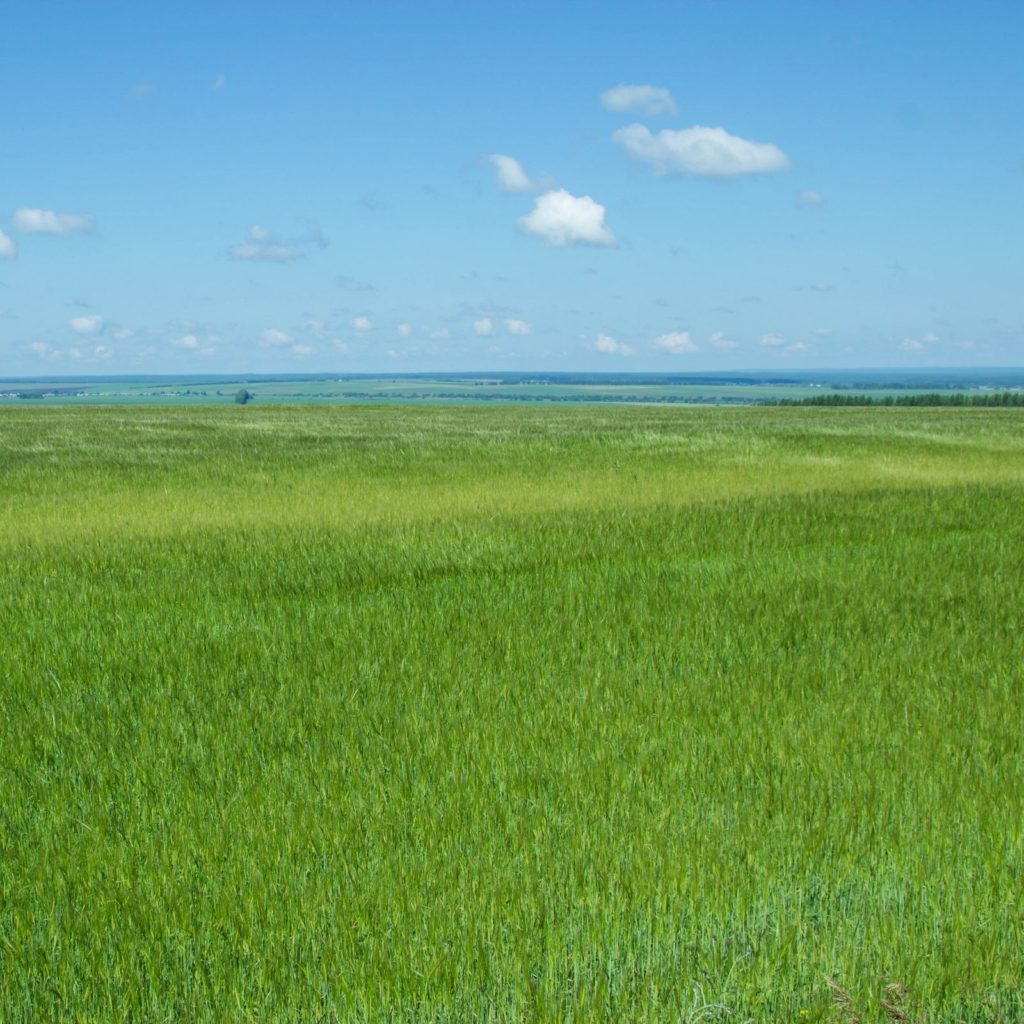 The beauty of Russian fields. Picturesque summer view.